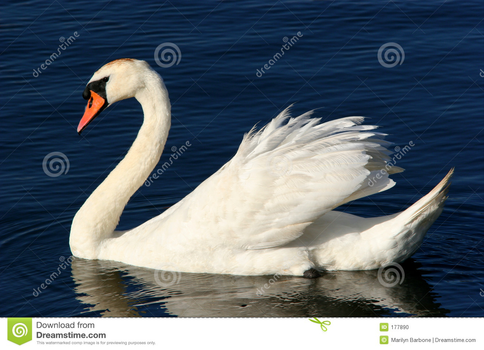 La tolerancia del cisne