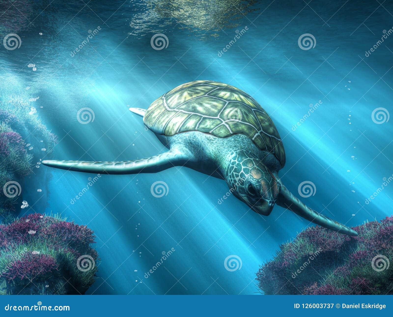 La tortue de mer