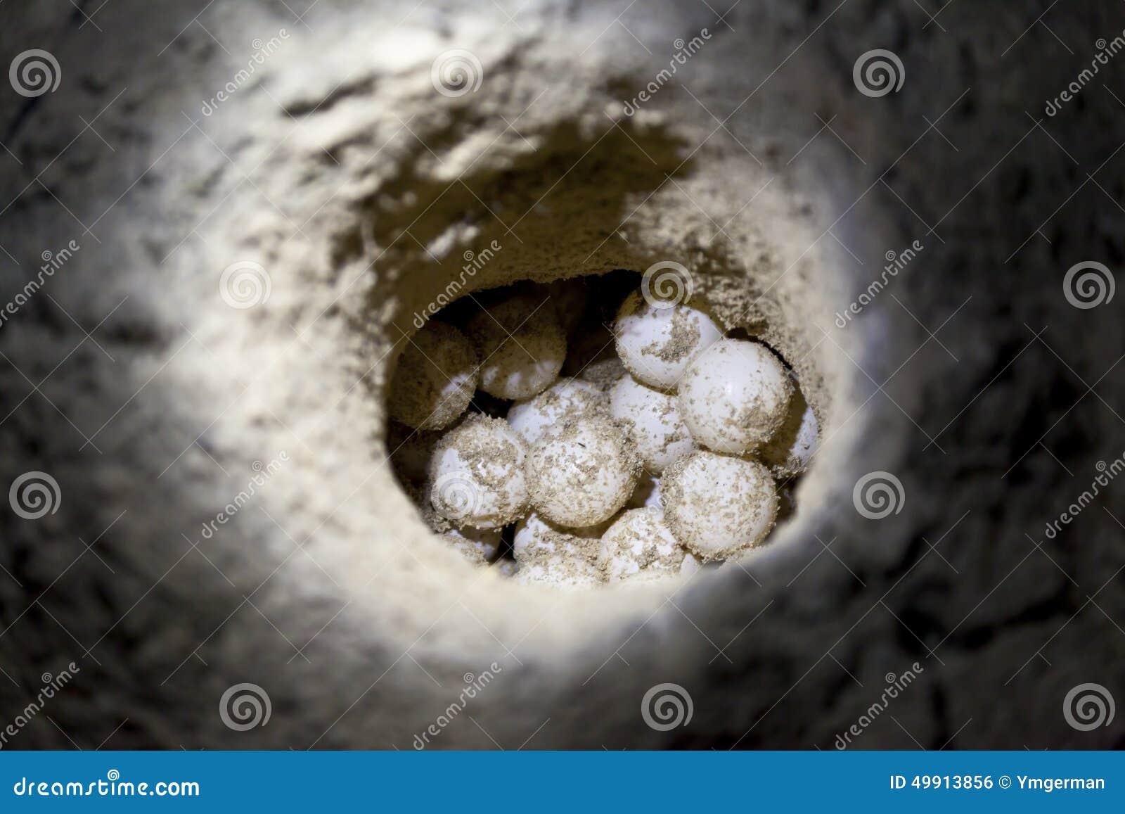 La tortuga de mar verde eggs en agujero de la arena en una playa