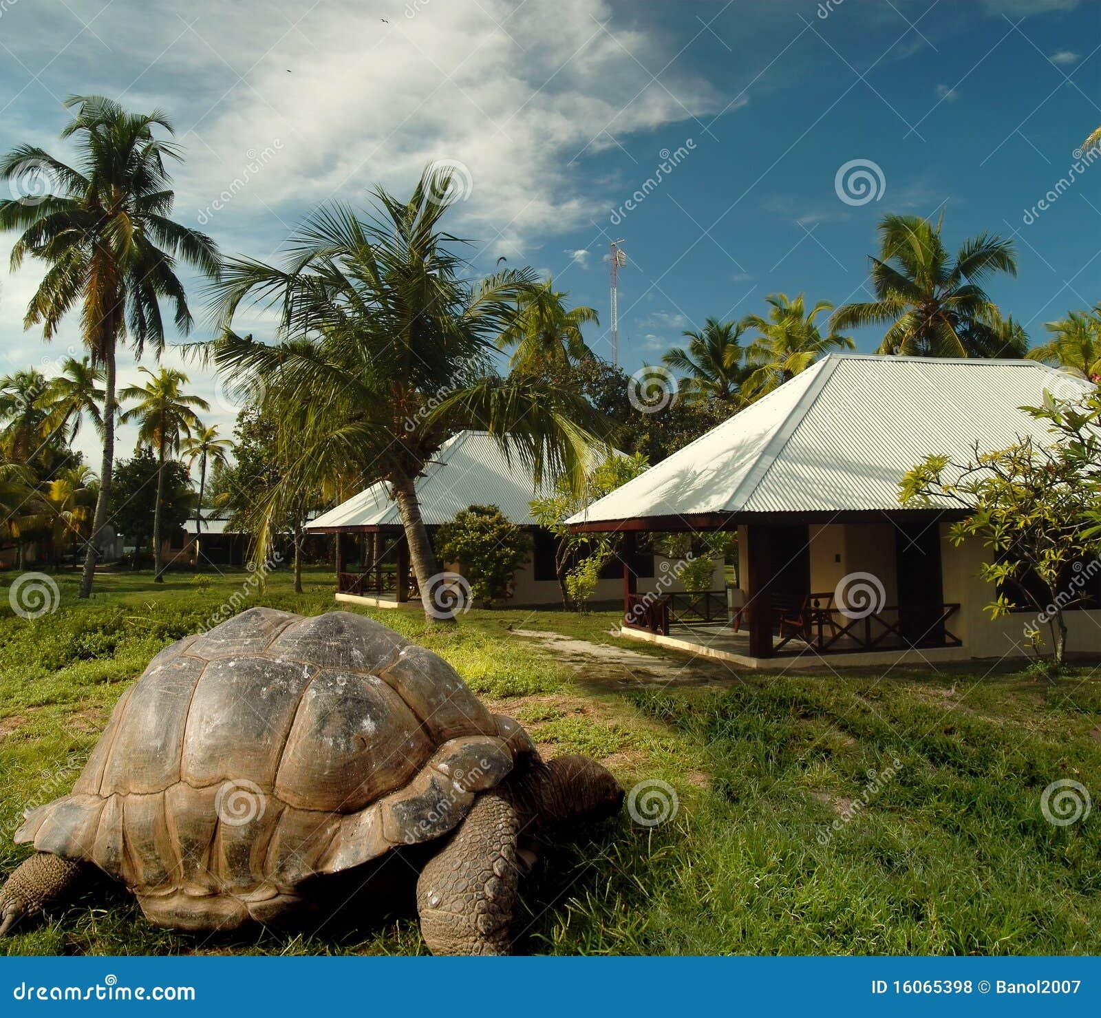 los piratas de la isla tortuga: