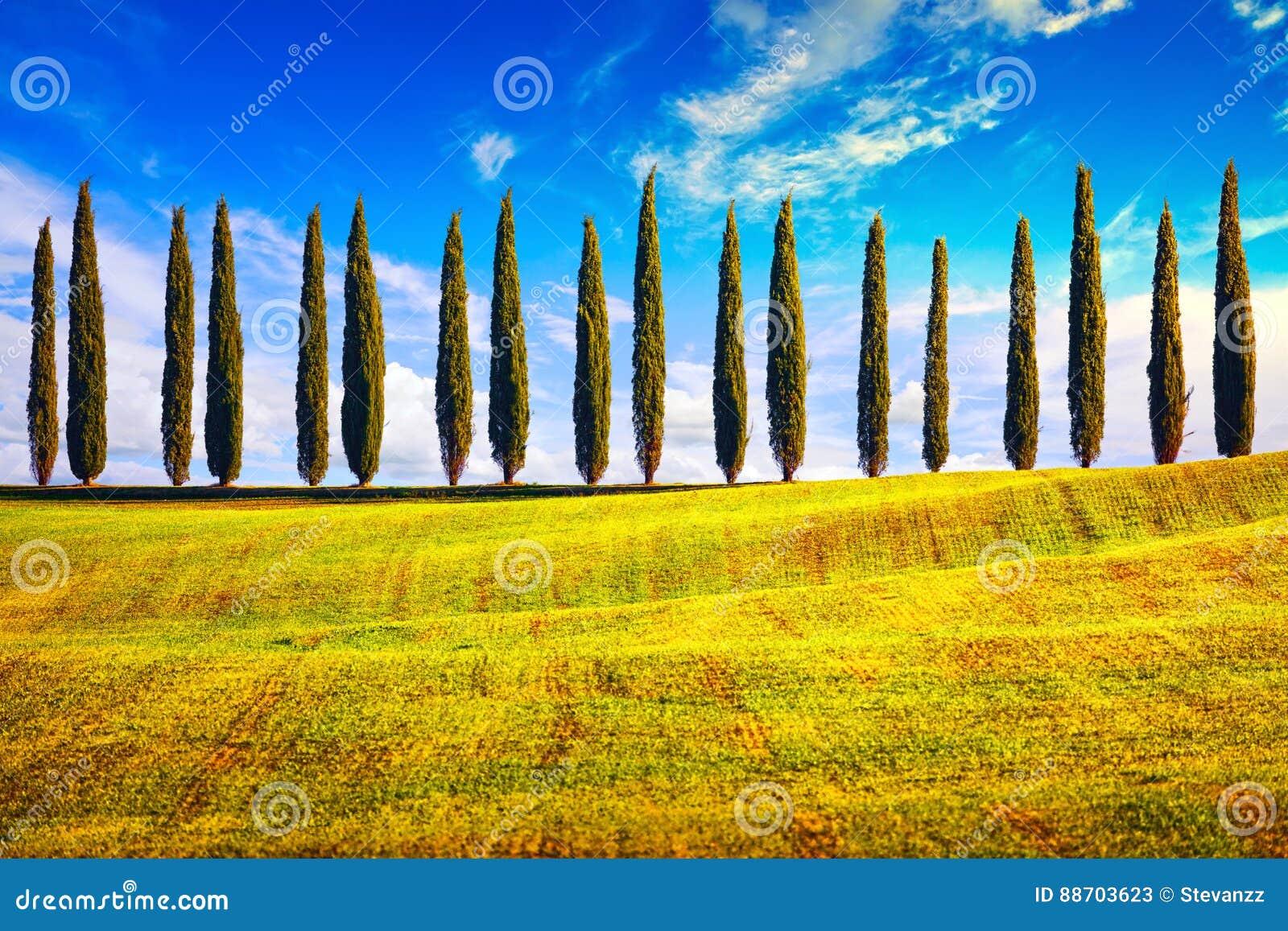 La Toscane, arbres de Cypress rament le paysage de campagne, Italie, l Europe