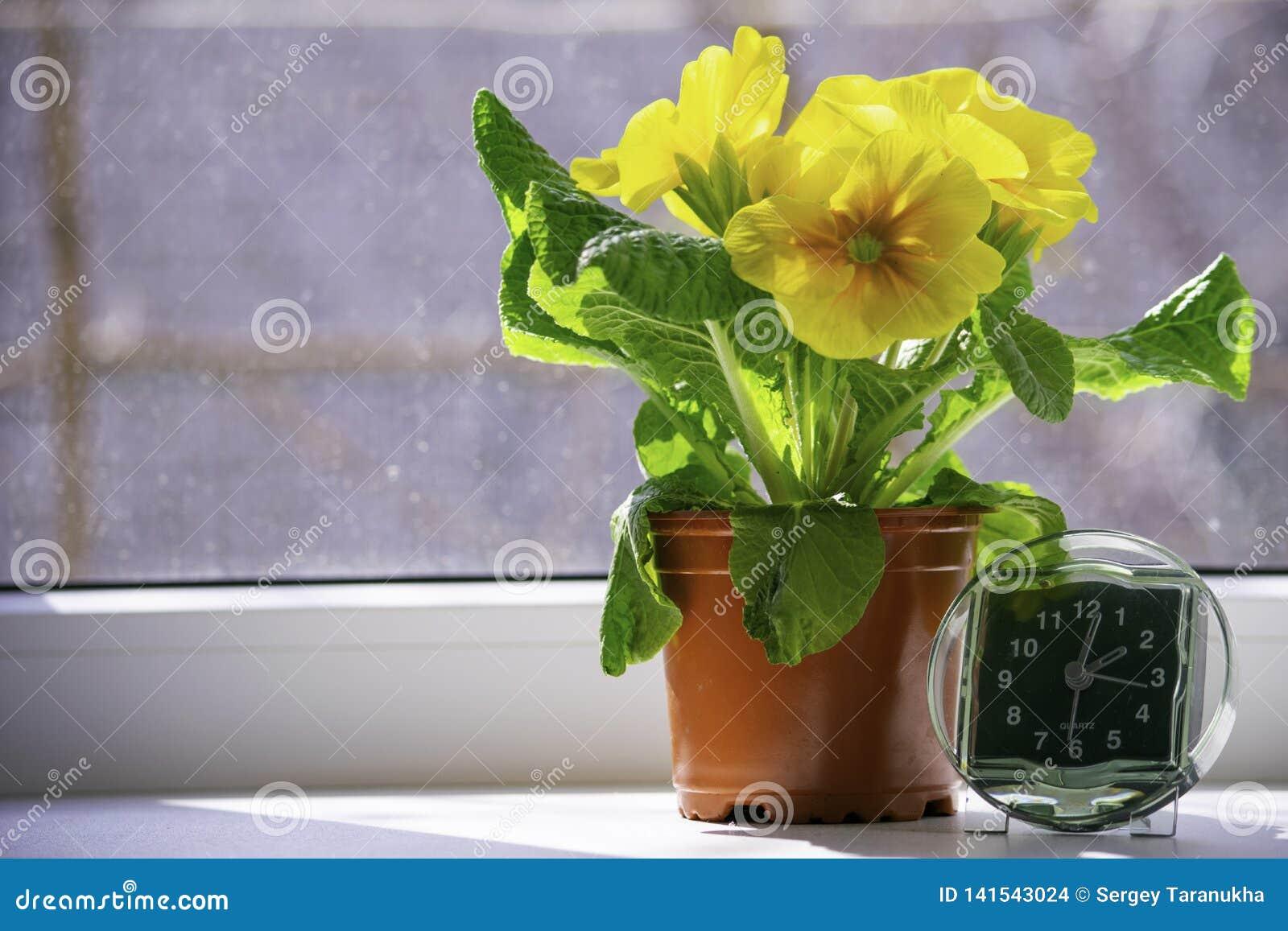 La transición al tiempo de verano, la llegada de la primavera, la situación del reloj en el ventana-travesaño sol-mojado al lado
