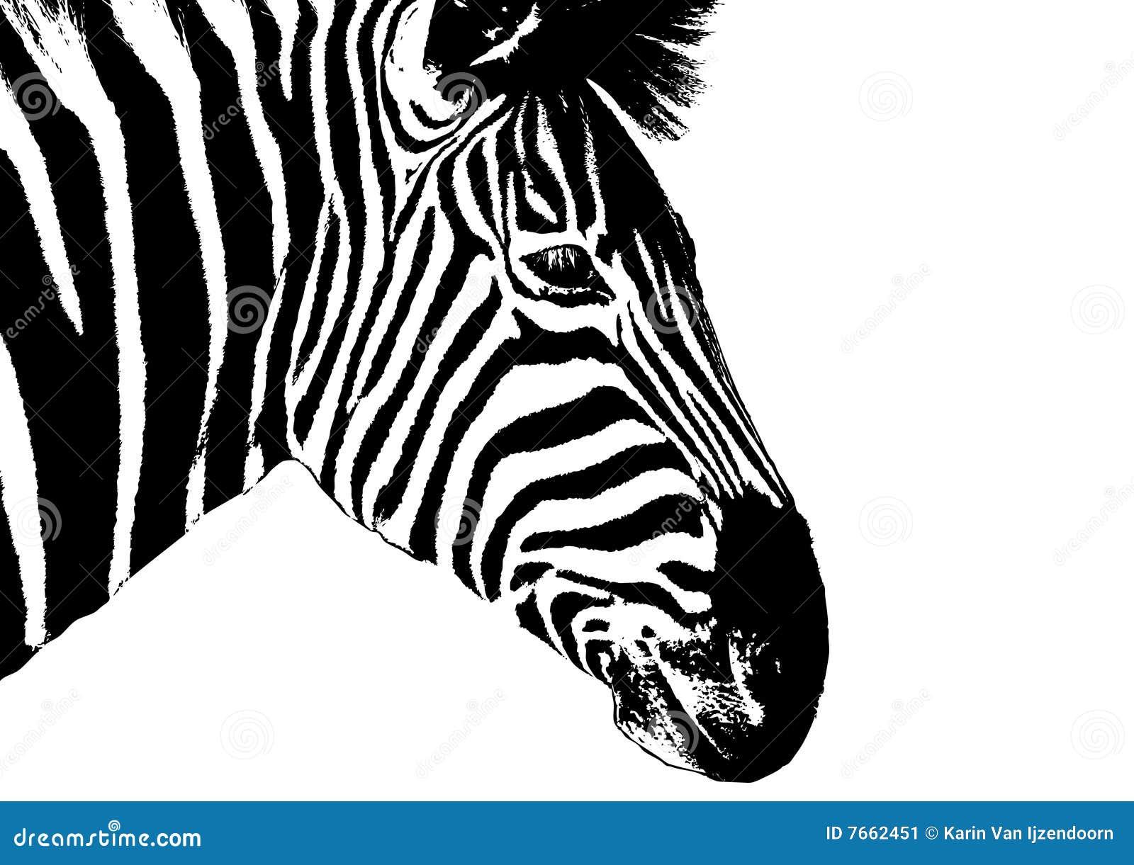 La T Te A Illustr Le Z Bre Image Stock Image 7662451