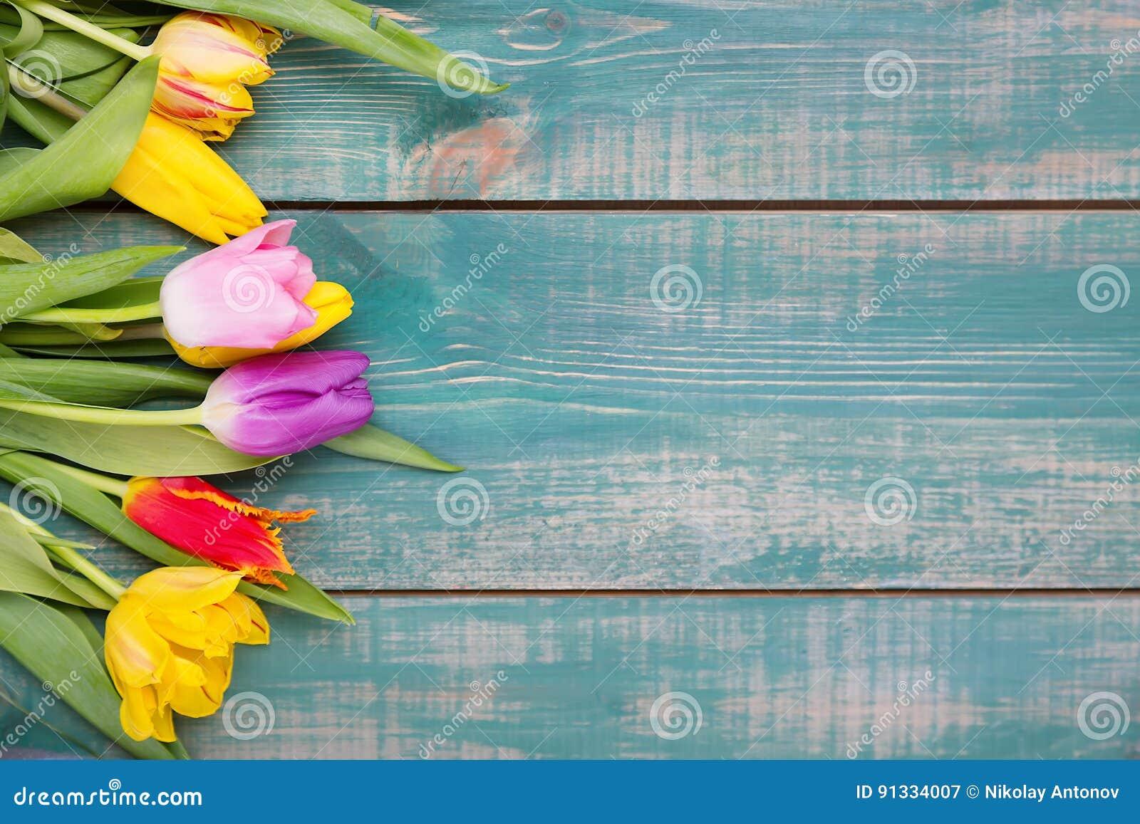 La tulipe colorée de ressort fleurit sur le fond en bois vert comme carte de voeux avec l espace libre