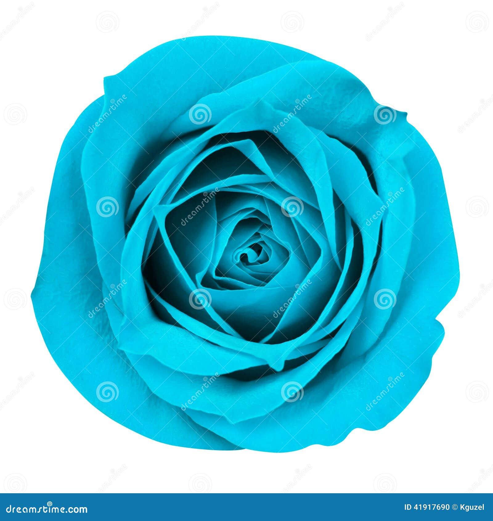 La turquesa Rose aisló