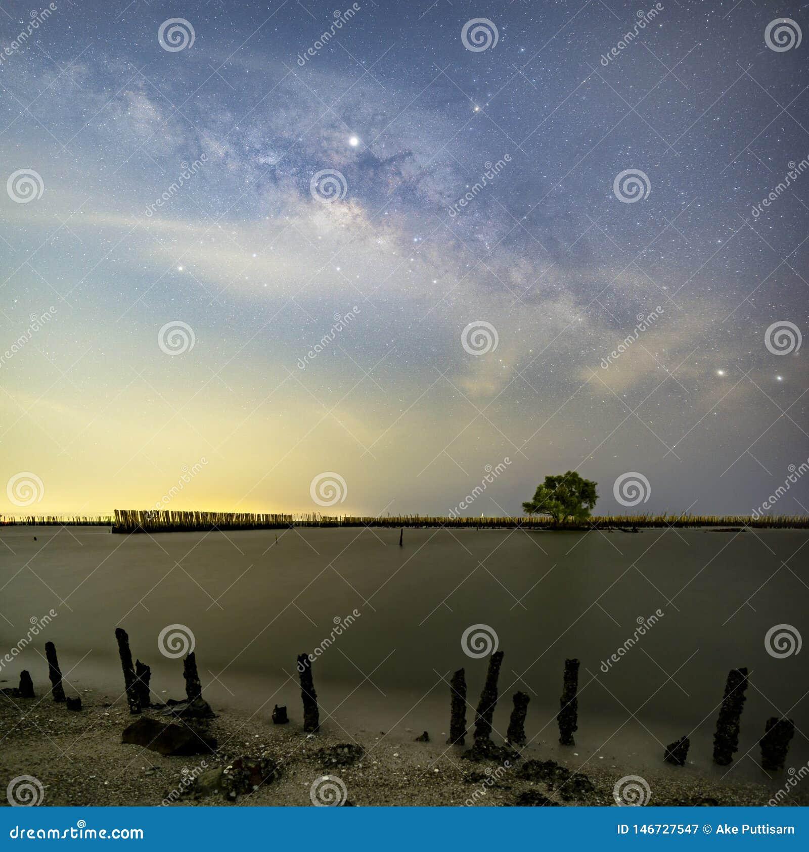 La v?a l?ctea sobre un solo ?rbol y el paisaje de bamb? evita que el mar rompa la costa