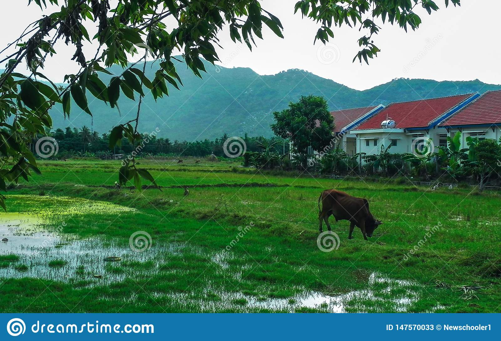 La vaca pasta el lago