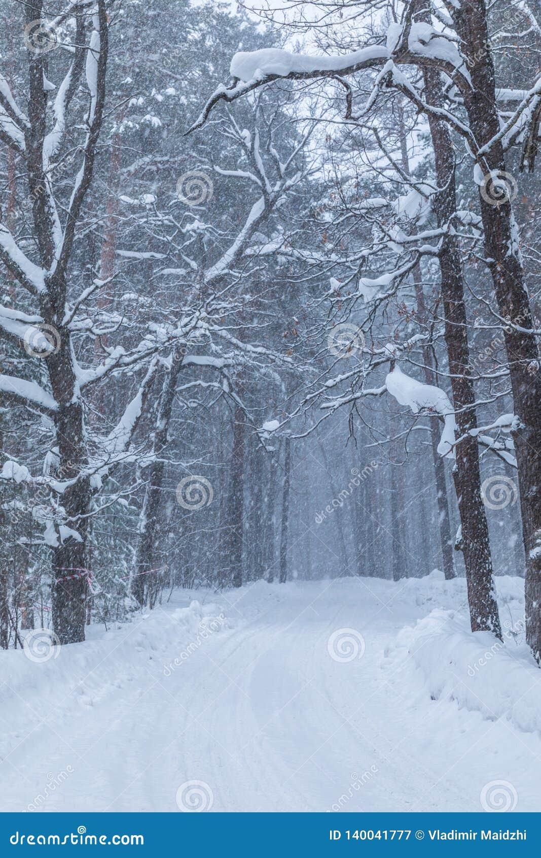 La ventisca en el bosque o el parque del invierno con la nieve que cae