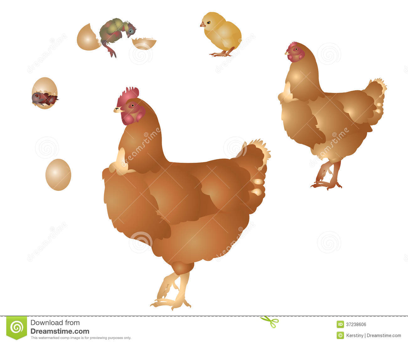 La vie de la poule illustration stock illustration du for Duree de vie des poules pondeuses