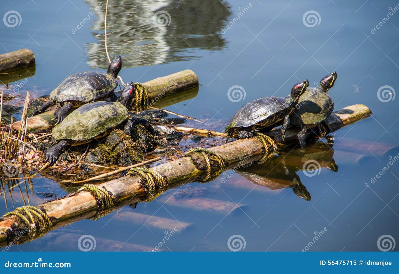La vie de tortues
