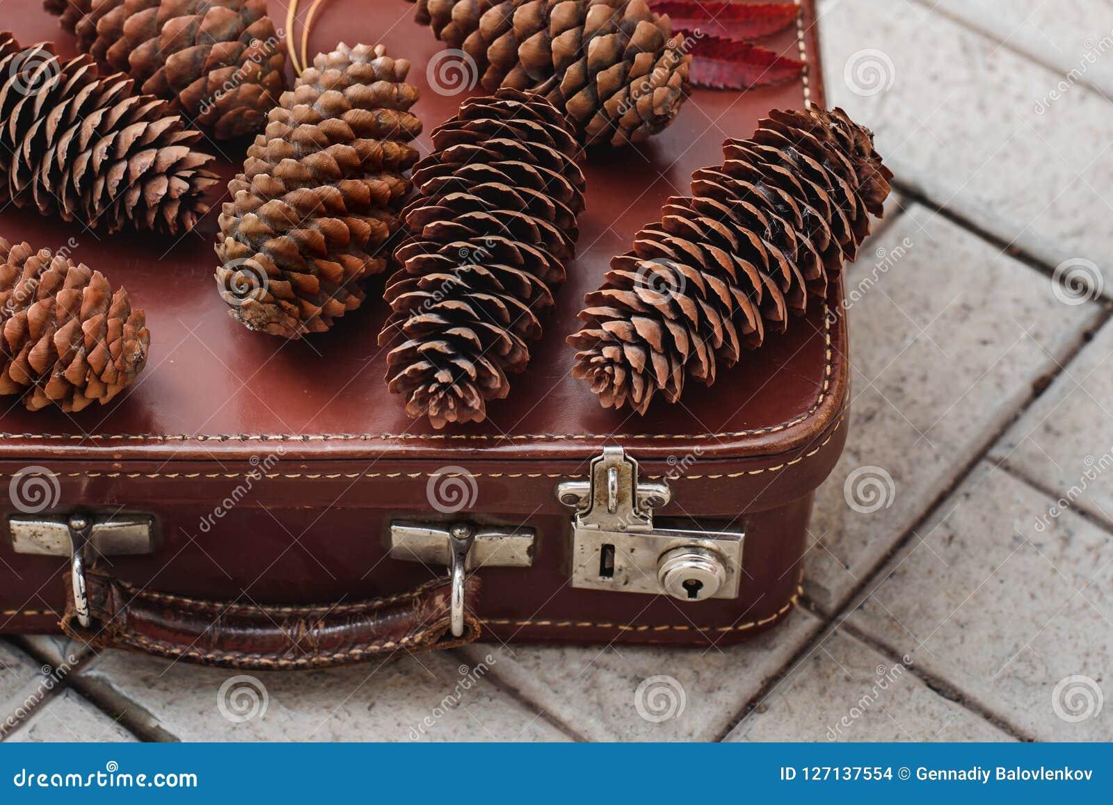 La vie toujours des cônes de pin et des baies de cendre de montagne sur les panneaux en bois, décorations de Noël