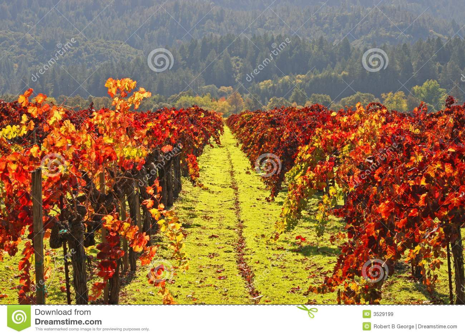 La vigna W/Autumn colora Napa
