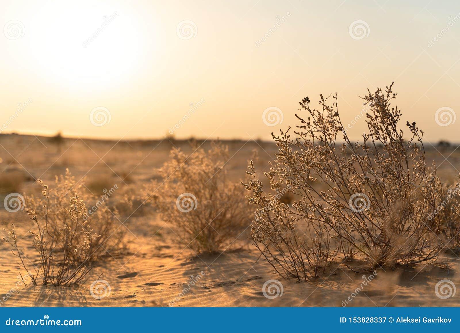 La visión en desierto indio
