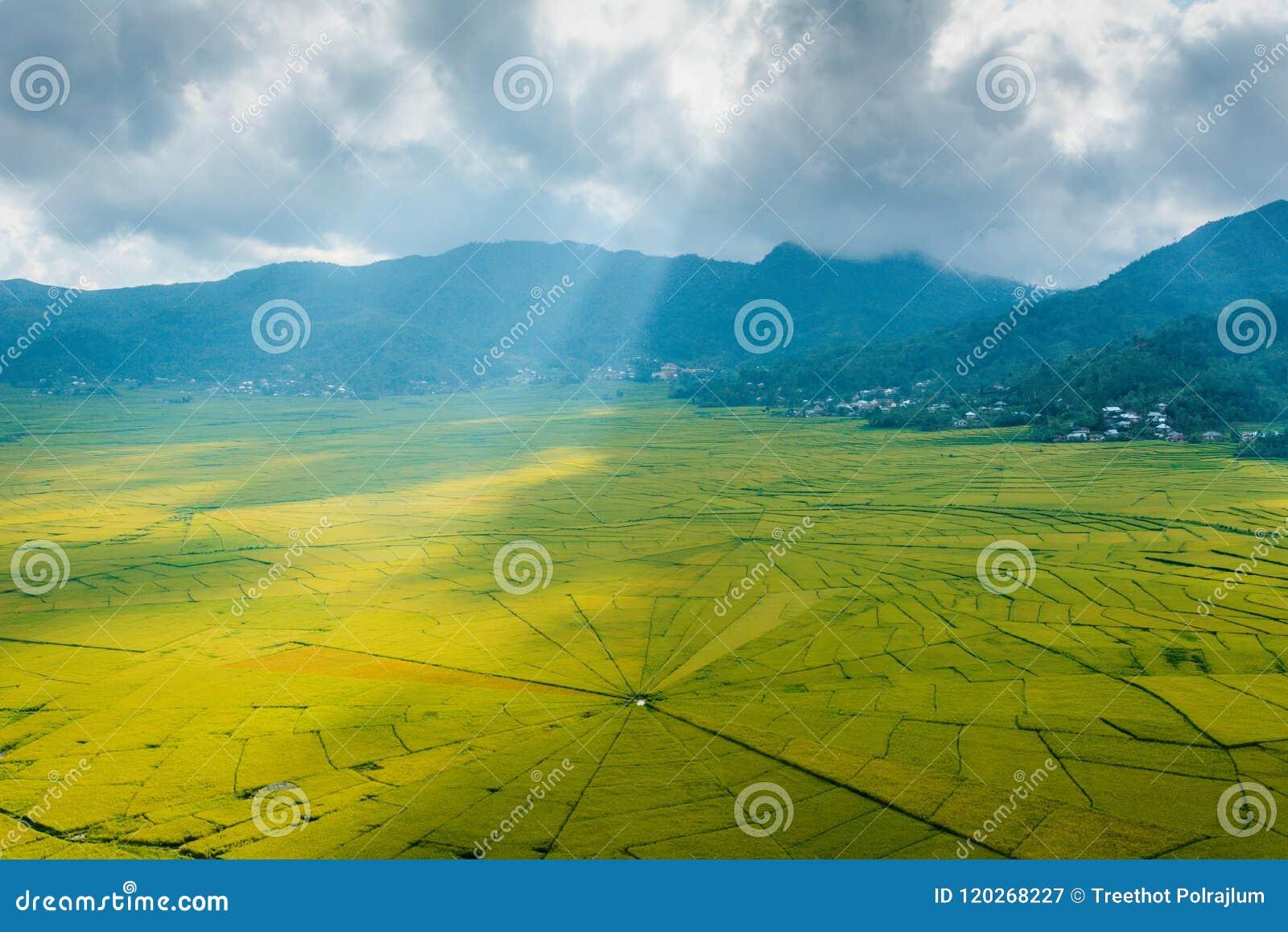La vista aérea del arroz del web de araña de Lingko coloca mientras que perforación de la luz del sol a través de las nubes a la