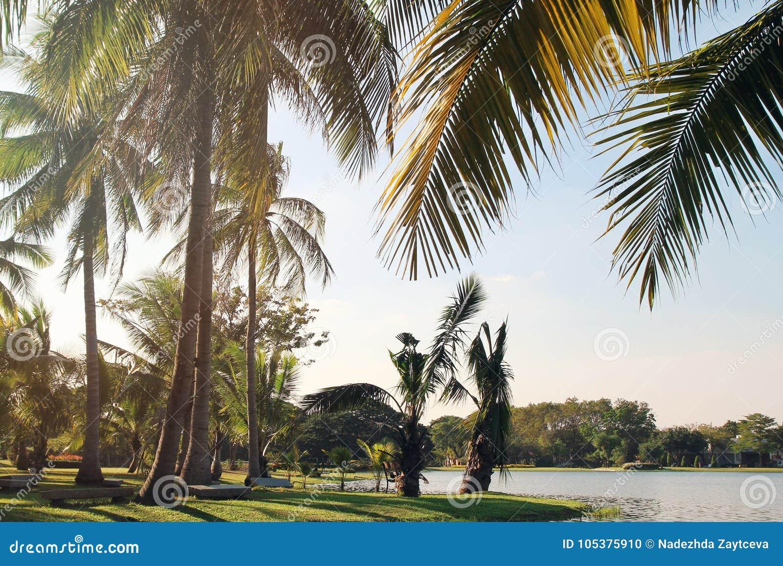 La vista sugli alberi del cocco vicino ad un lago su un fondo di un cielo blu Foto modificata