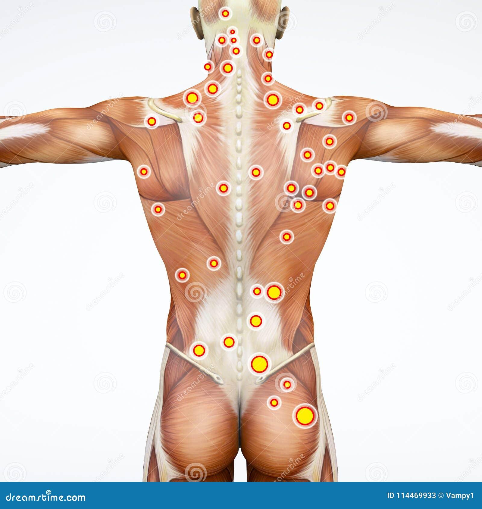 La Vista Trasera De Un Hombre Y De Su Disparador Señala Músculos De ...