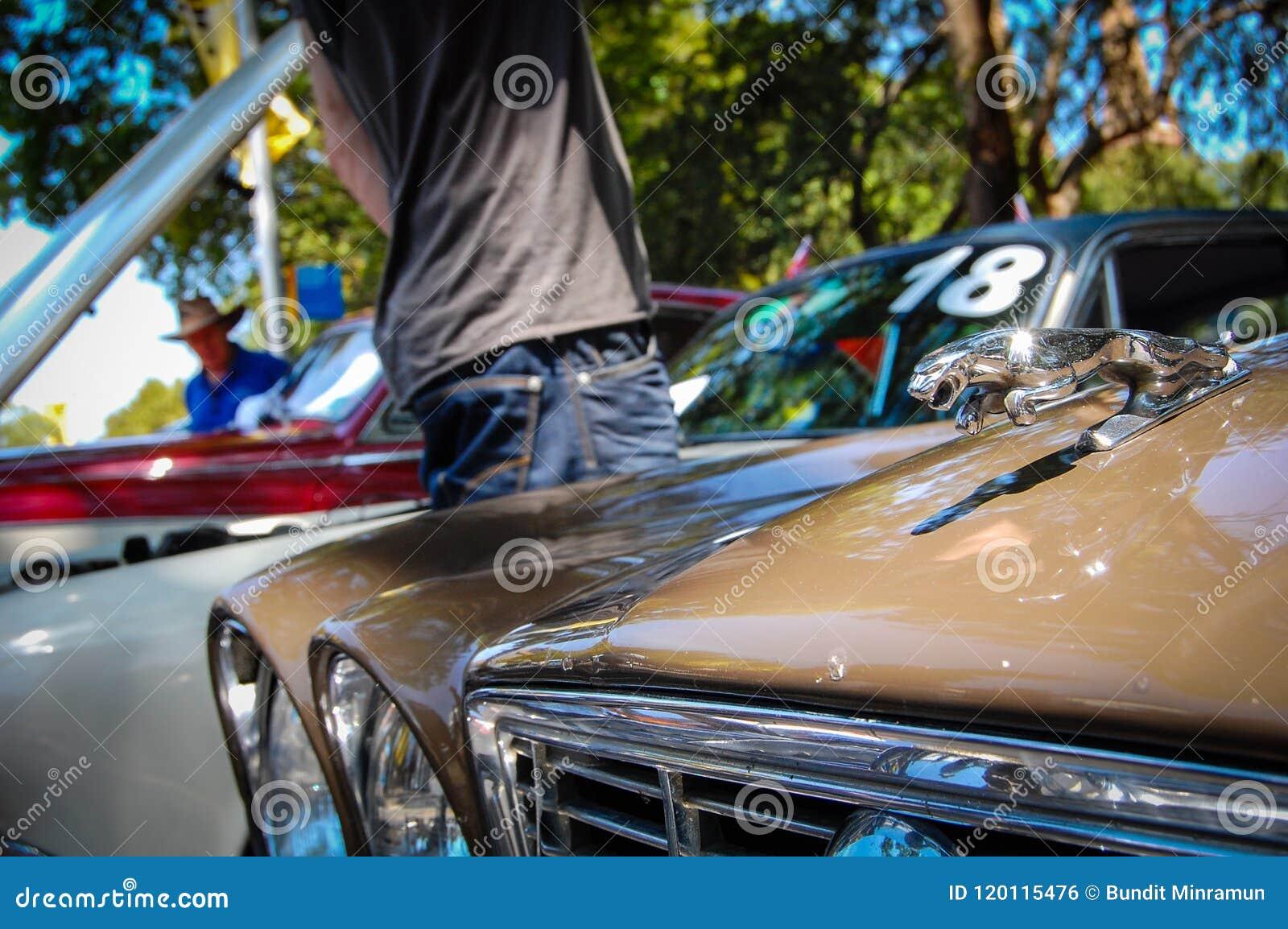 La voiture de Jaguar de vintage, l image montre le logo classique du tigre de Jaguar en chrome 3D sur le capot de voiture dans le