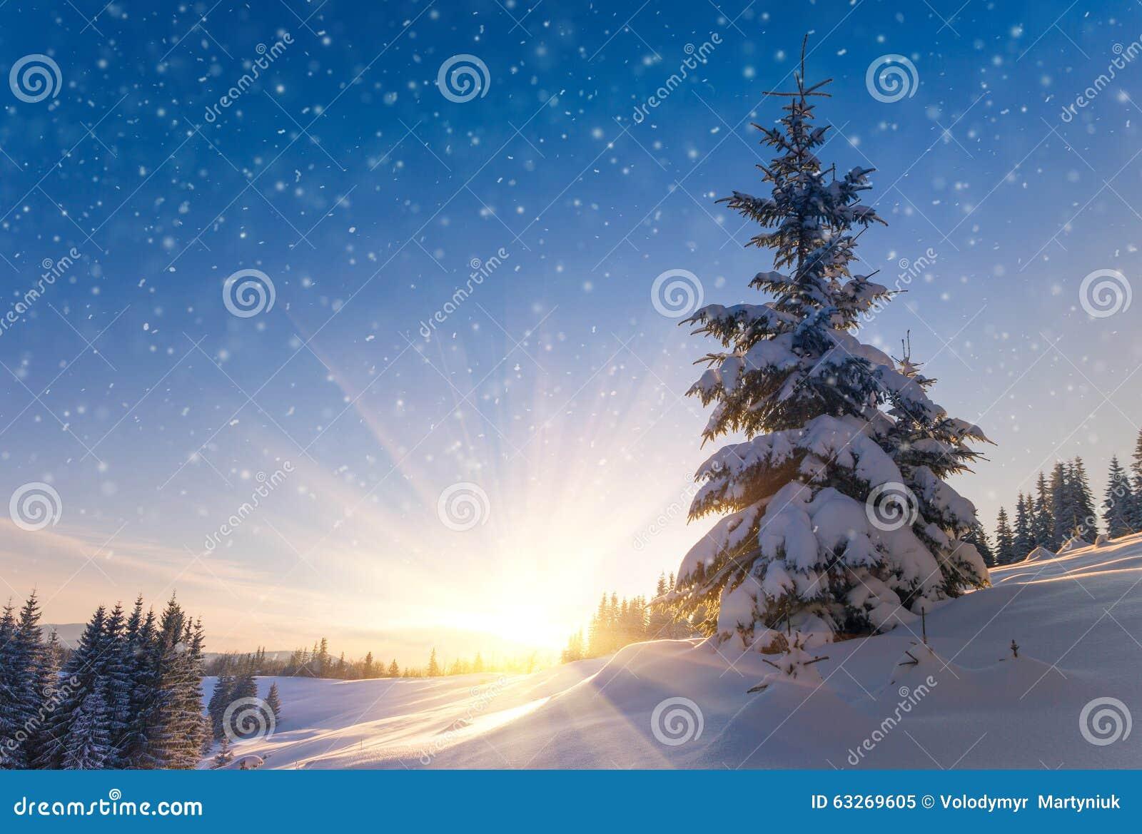 La vue des arbres et de la neige couverts de neige de conifère s écaille au lever de soleil Le fond du Joyeux Noël ou de nouvelle