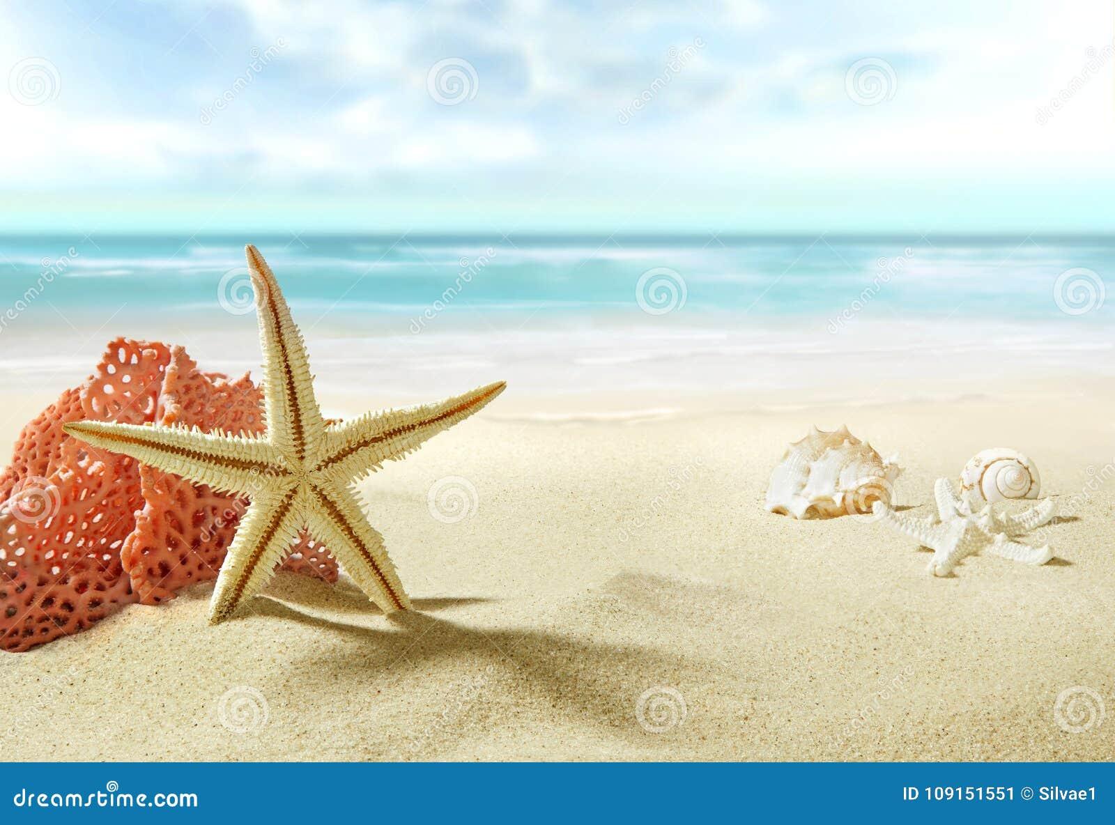 La vue sur la plage sablonneuse