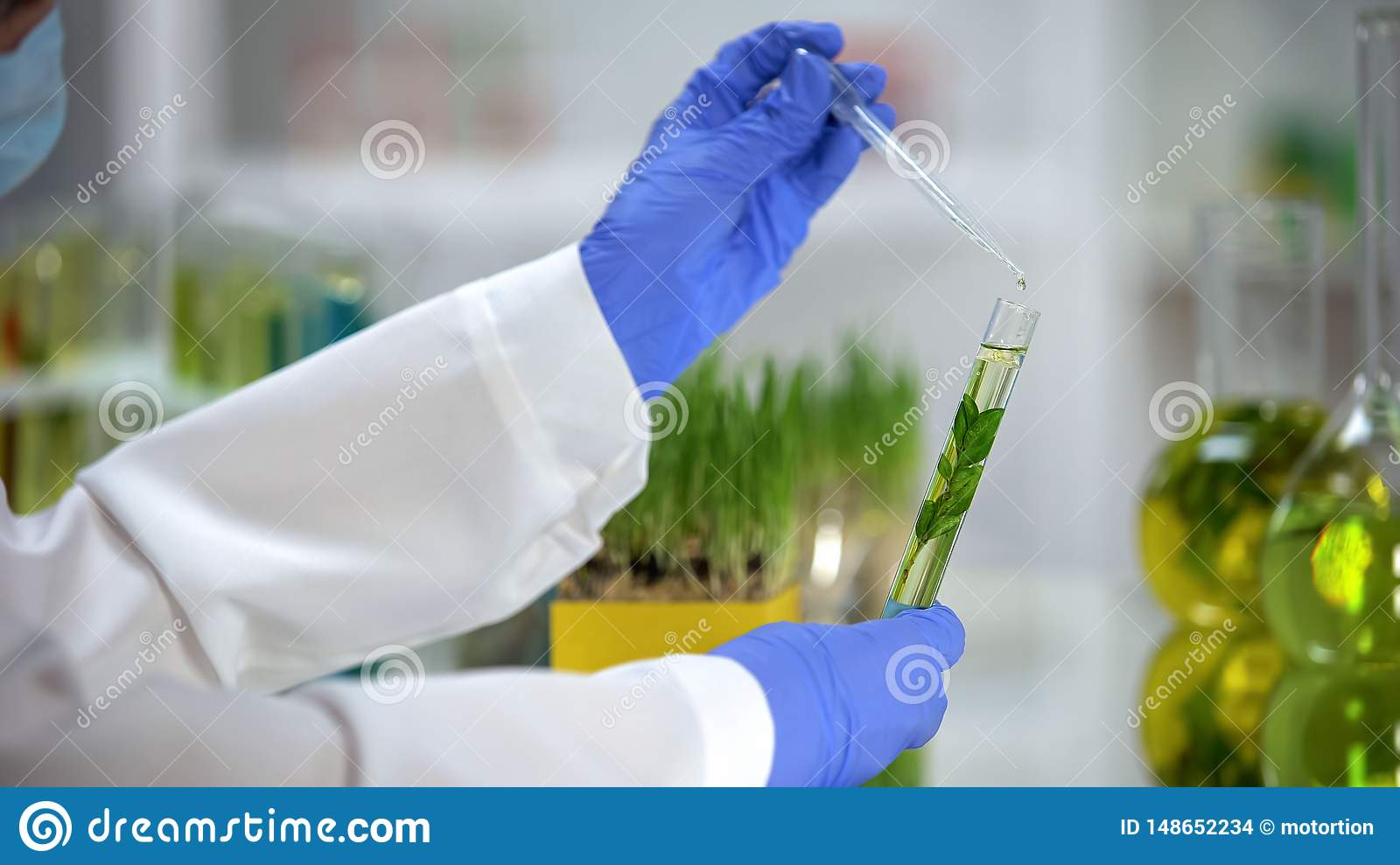 Lab assistant dripping liquid in tube with plant, organic cosmetology extract