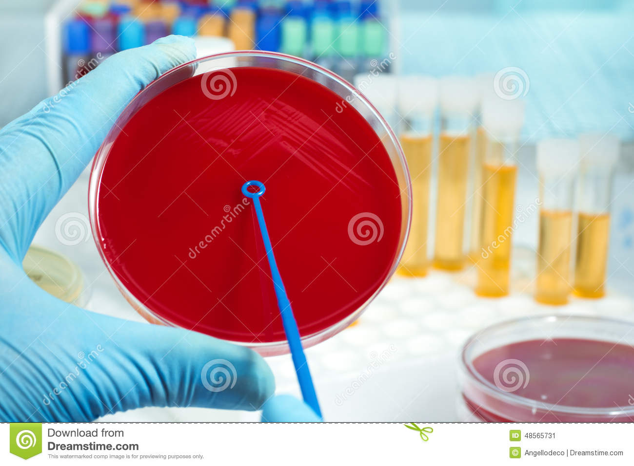 Lab Technician Inoculating Petri Dish Stock Image - Image of ... for Inoculation Microbiology  575lpg