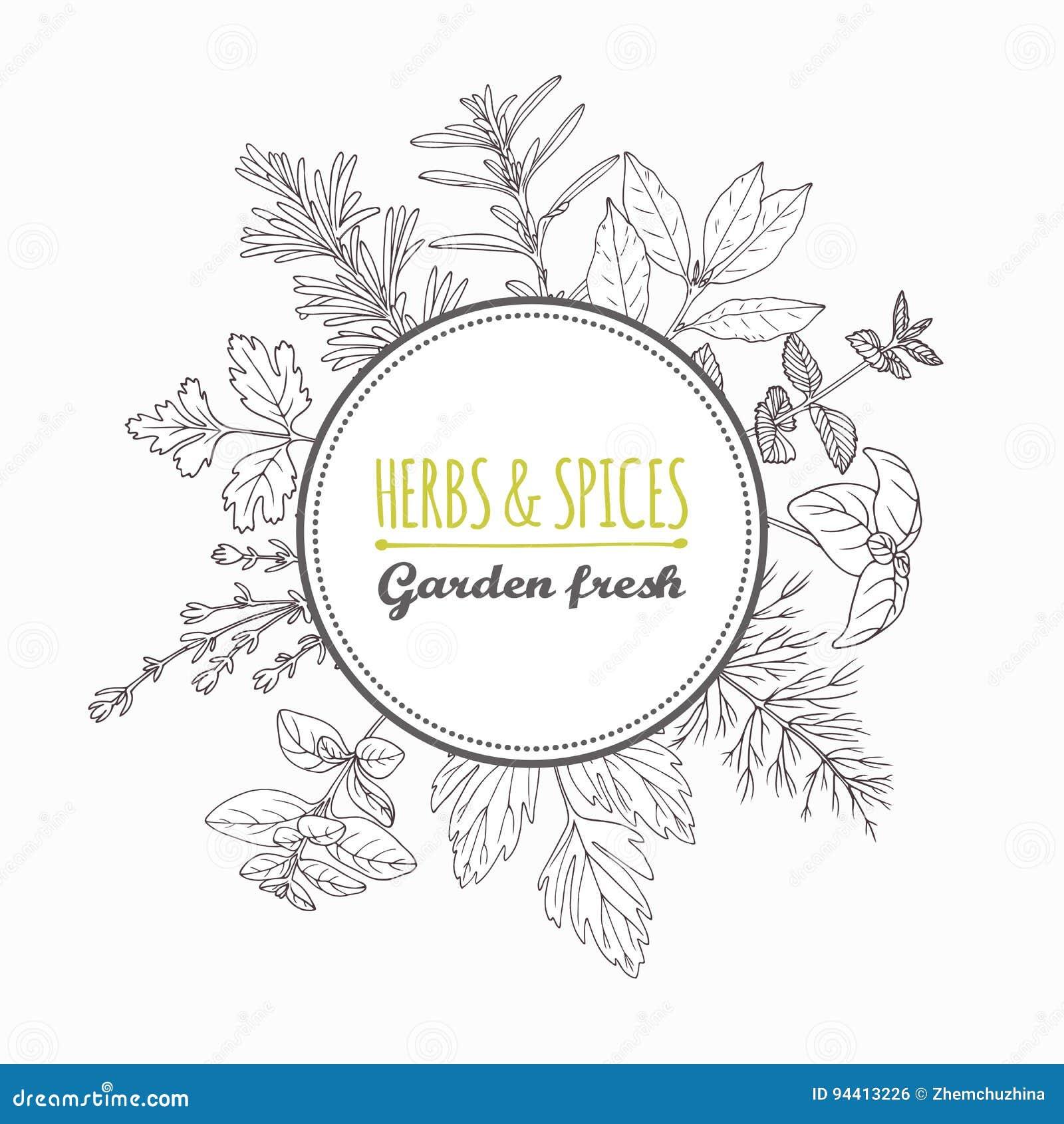 Label de cercle avec les herbes et les épices tirées par la main Assaisonnements de style d ensemble