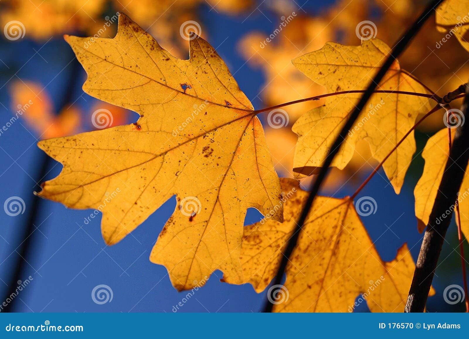 Laberinto del otoño