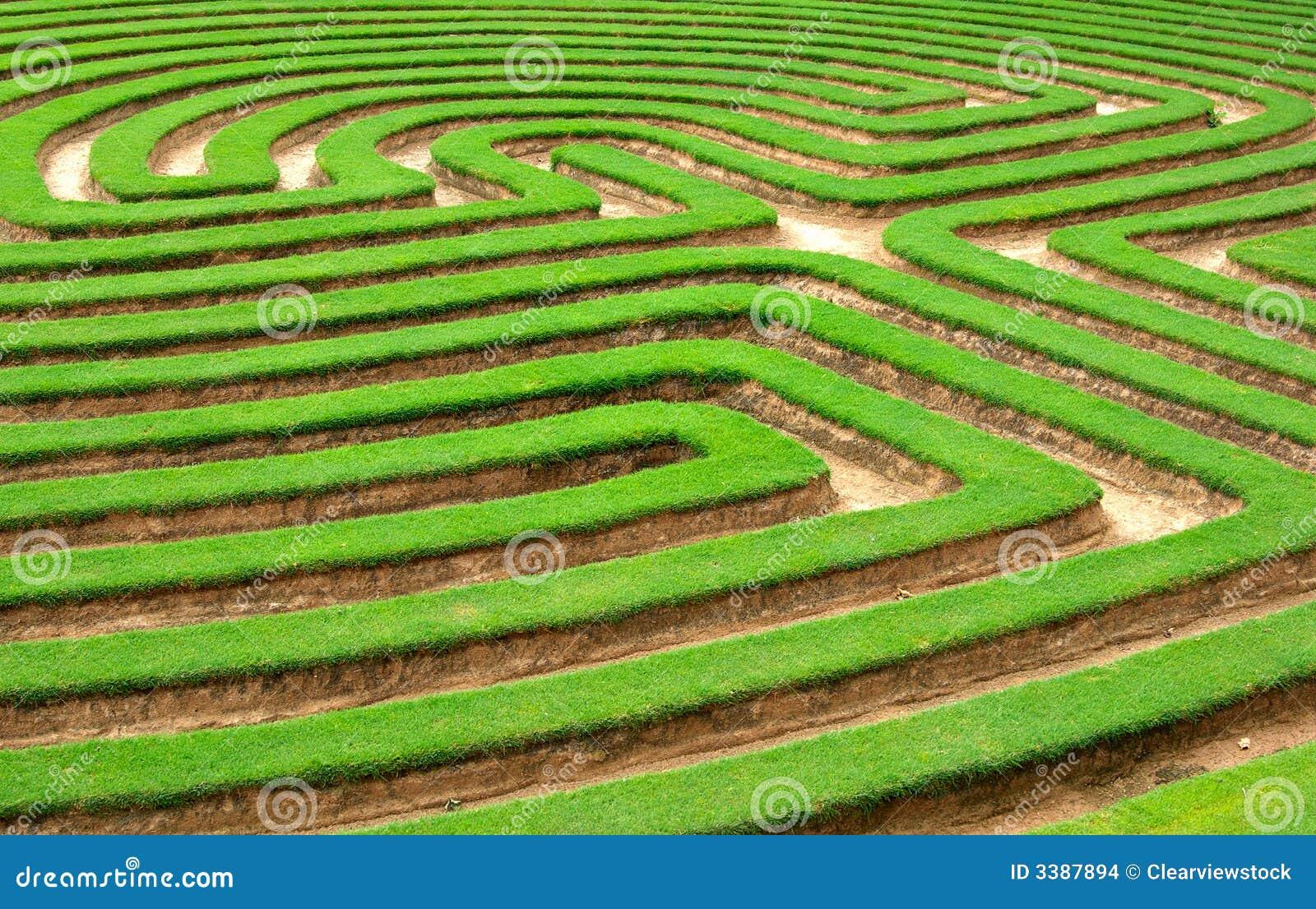 Labirinto del giardino dell erba o del prato inglese
