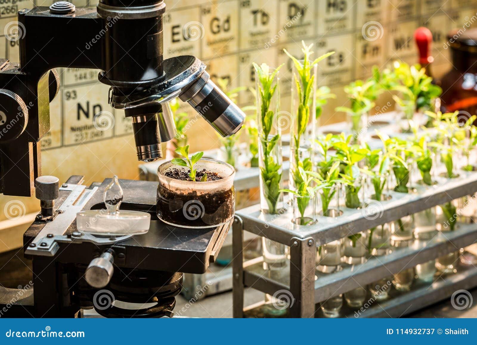 Laboratoire d école avec le microscope et les plantes vertes