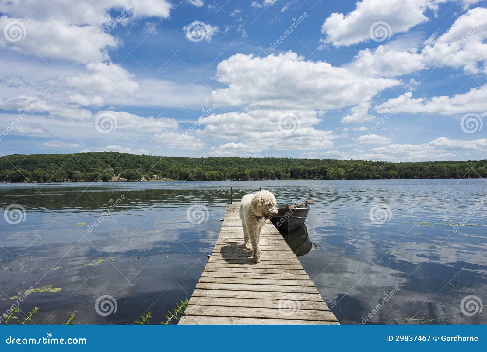 Cão na doca da casa de campo