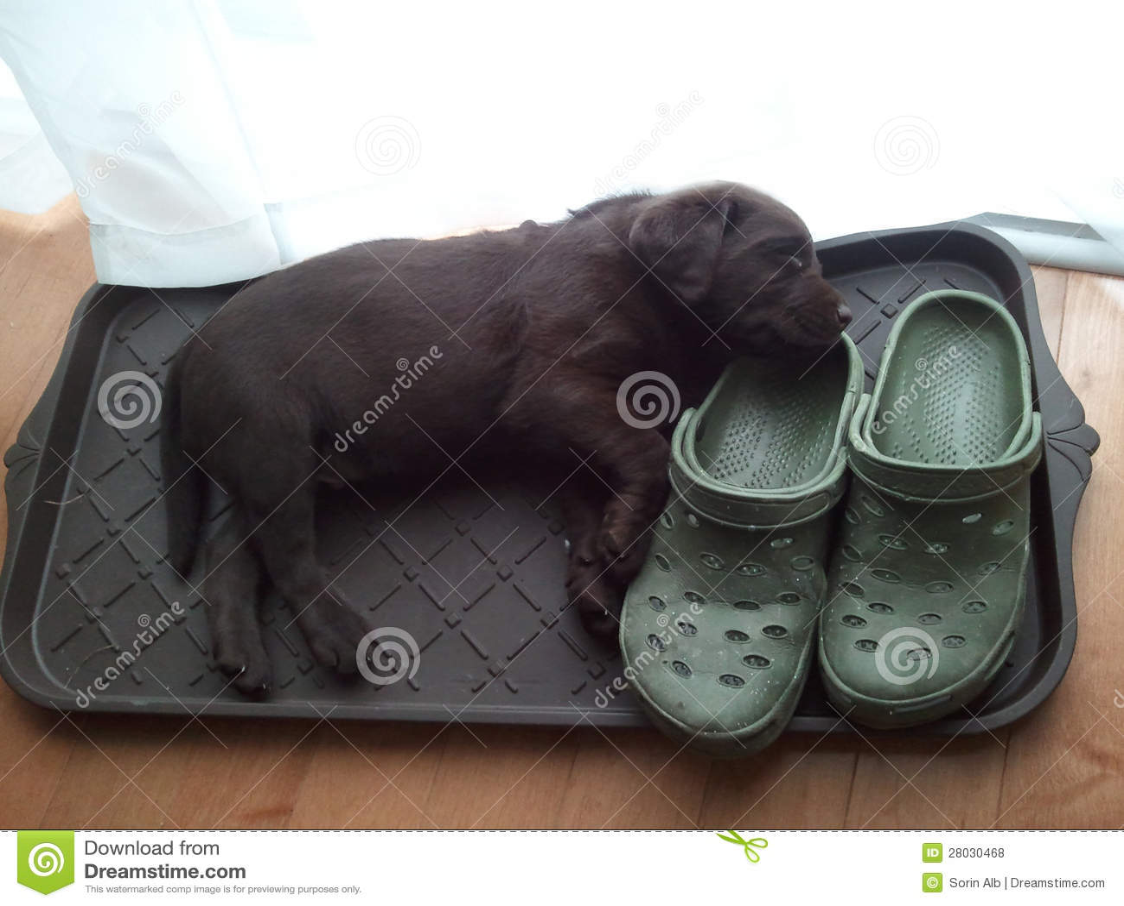 Labrador A La Carte