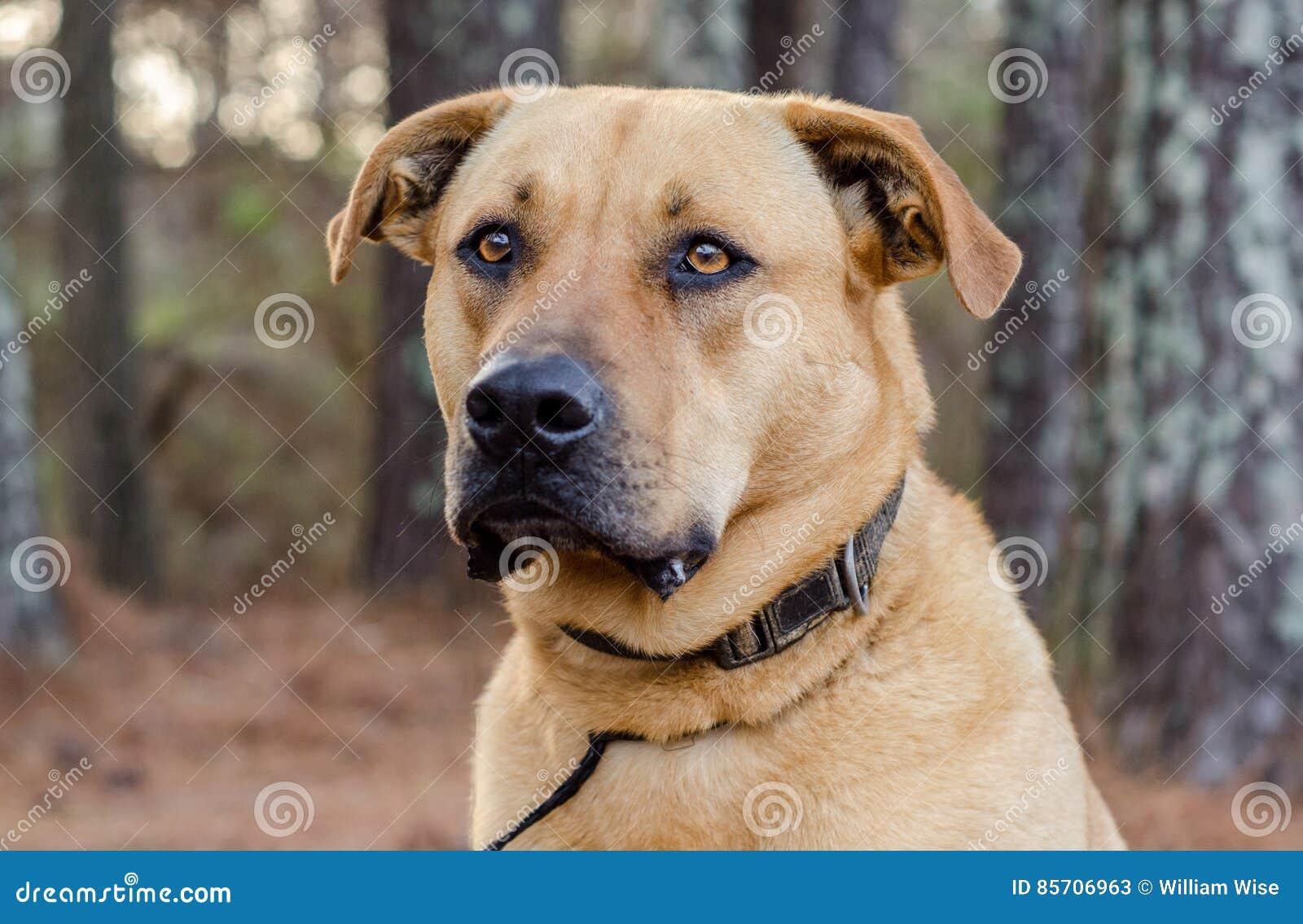 Large Dog Adoption Georgia