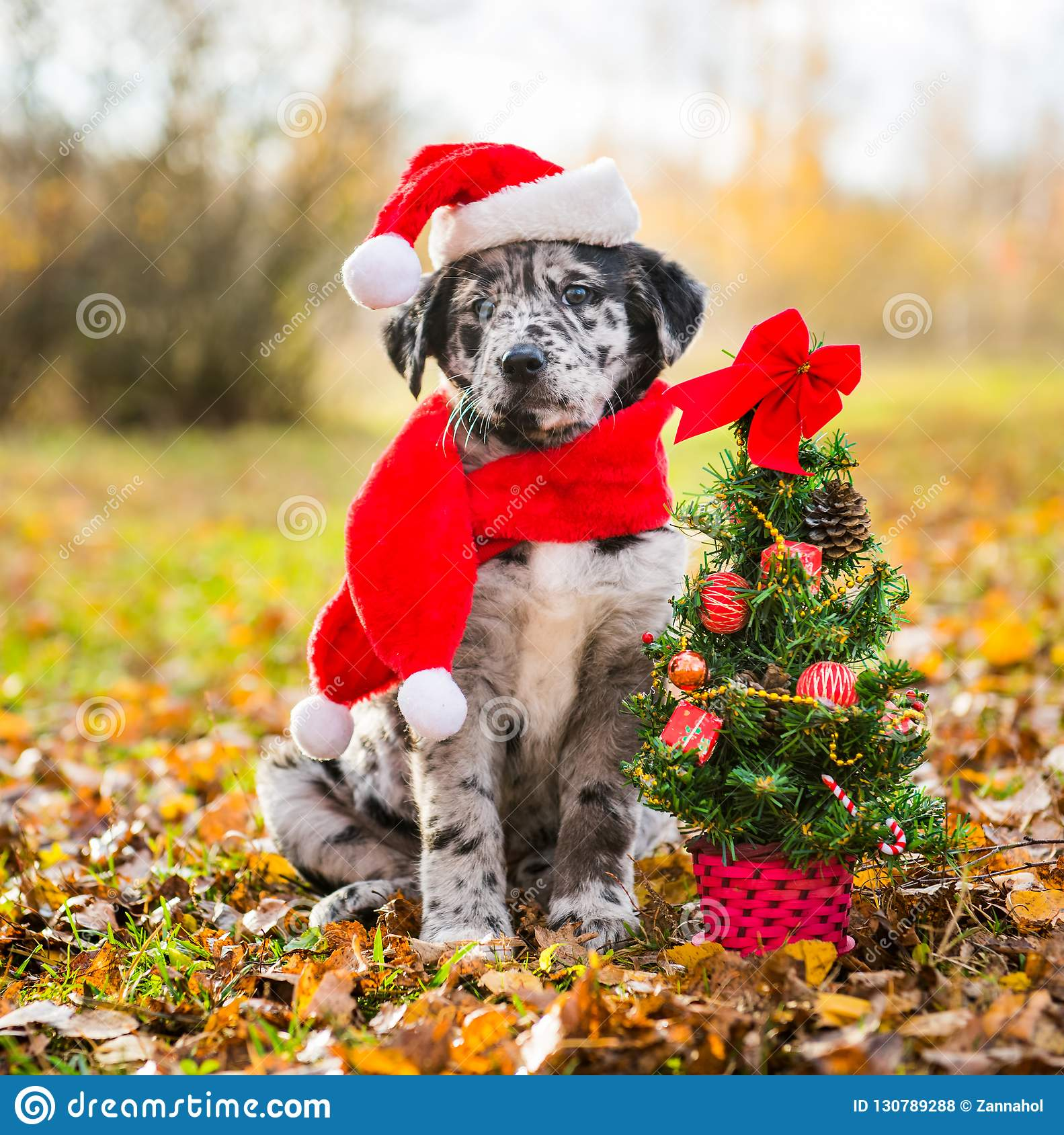 Labrador Puppy In Santa Hat And Christmas Tree Stock Photo Image Of Santa Father 130789288