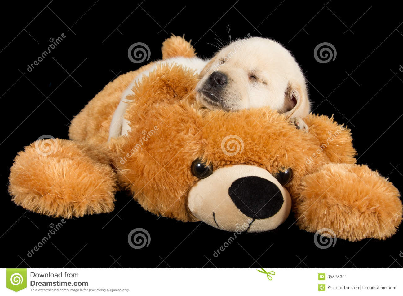Cute Puppy Pictures White Teddy Bear 1 Dog Breeds