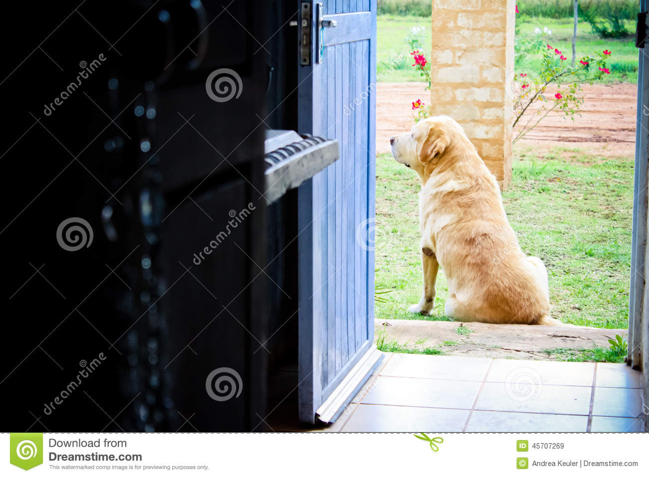 guarding the golden door Guarding the golden door contains plenty of information, but it's lacking the human element that can make history compelling a single narrative about an immigrant may not give readers a sense of the scope of the issue, but it can make a bigger impact, especially if it is couched in a discussion that brings in some of the larger issues.