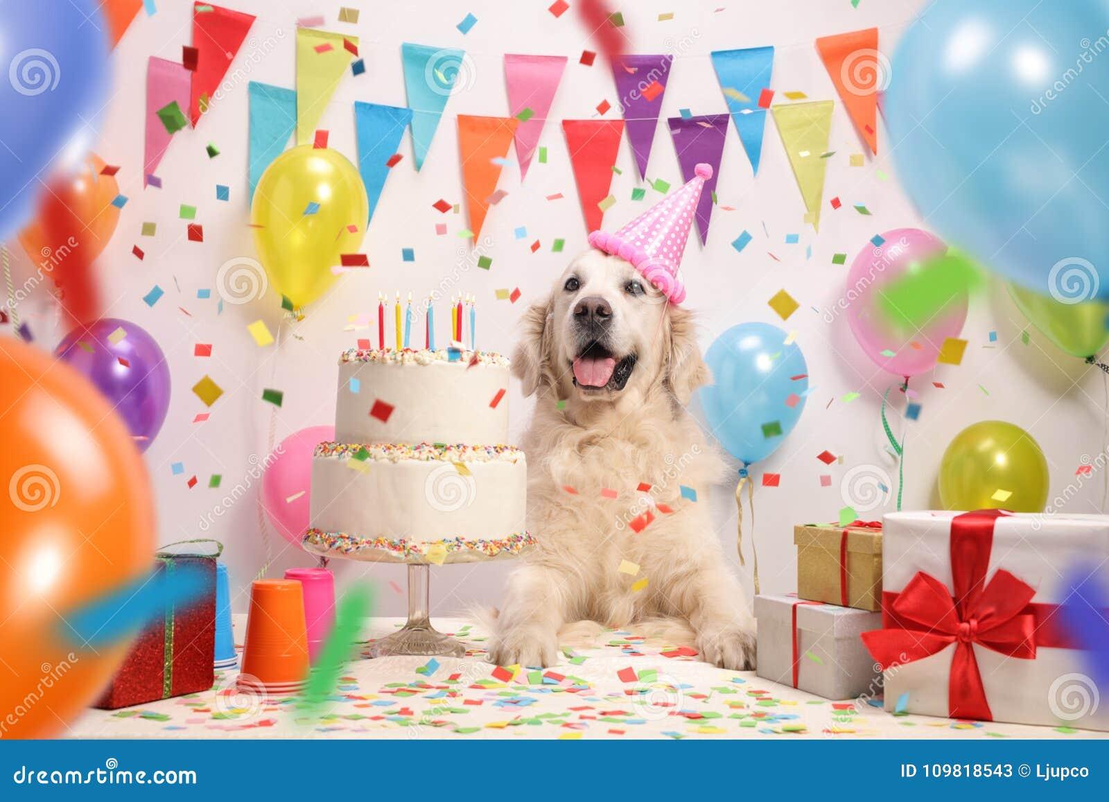 Fantastic Labrador Retriever Dog With A Birthday Cake Stock Image Image Of Funny Birthday Cards Online Elaedamsfinfo