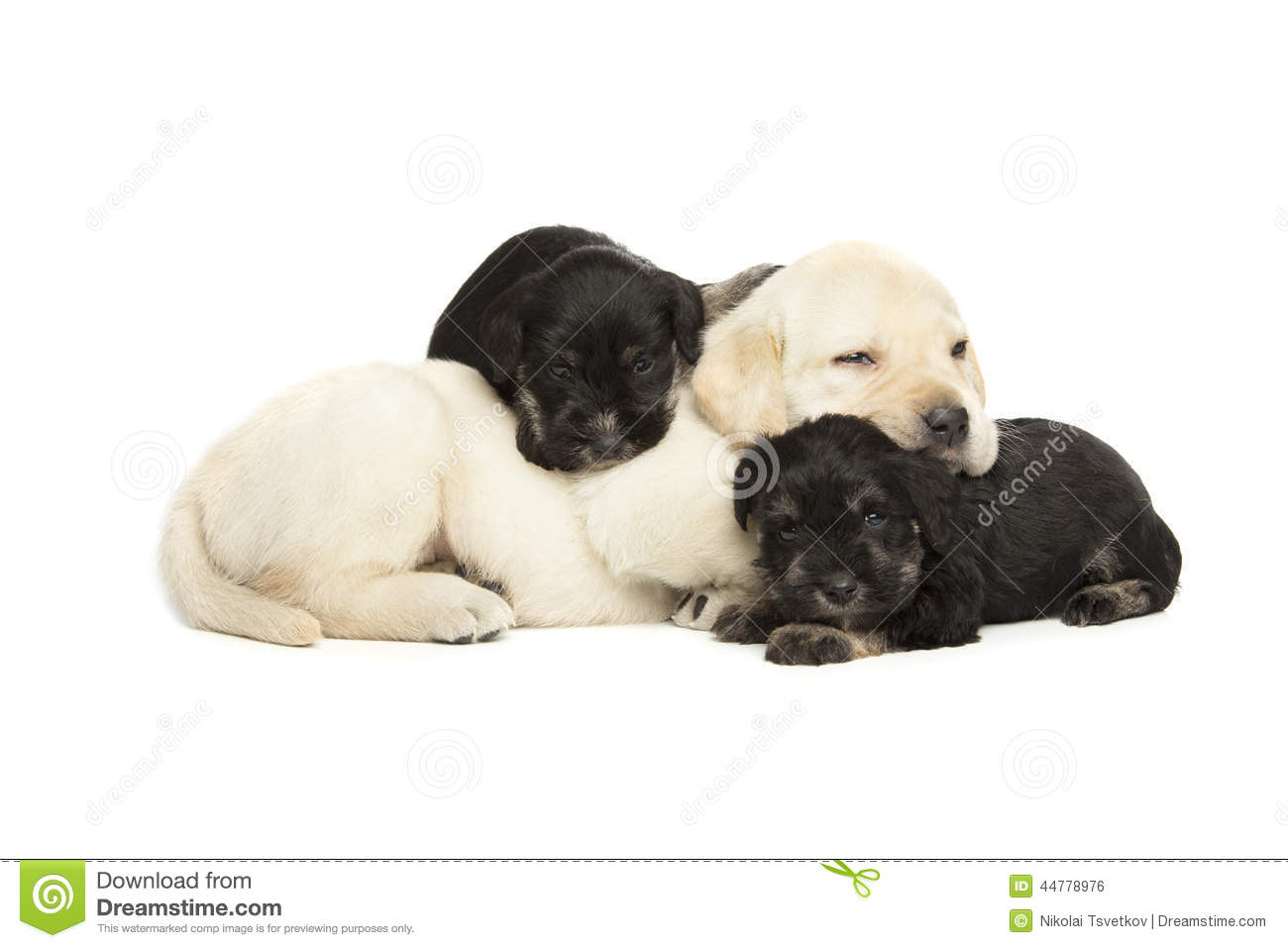 Labrador Retriever and Miniature Schnauzer black puppies isolated over ... Nail Polish Bottles Clipart