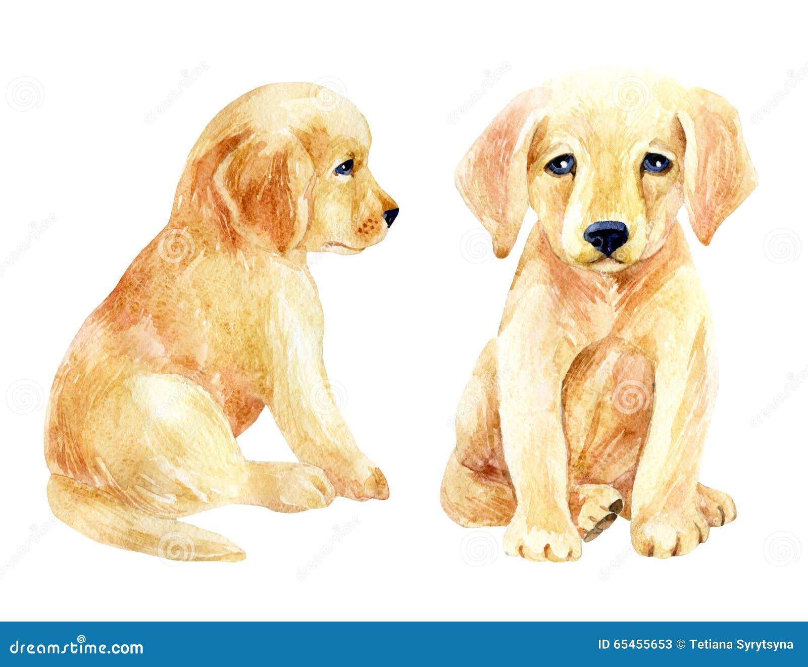 Labrador Retriever Puppy Set Stock Illustration Illustration Of