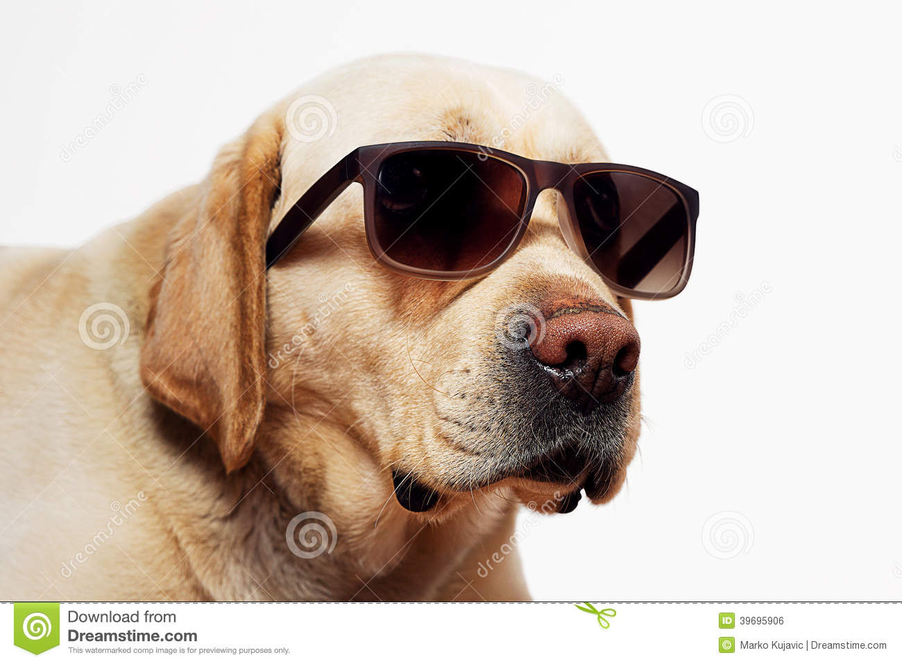 Pictures Of Sunglasses For Dogs