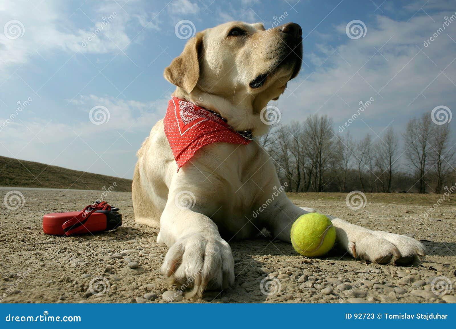 Labrador y sol