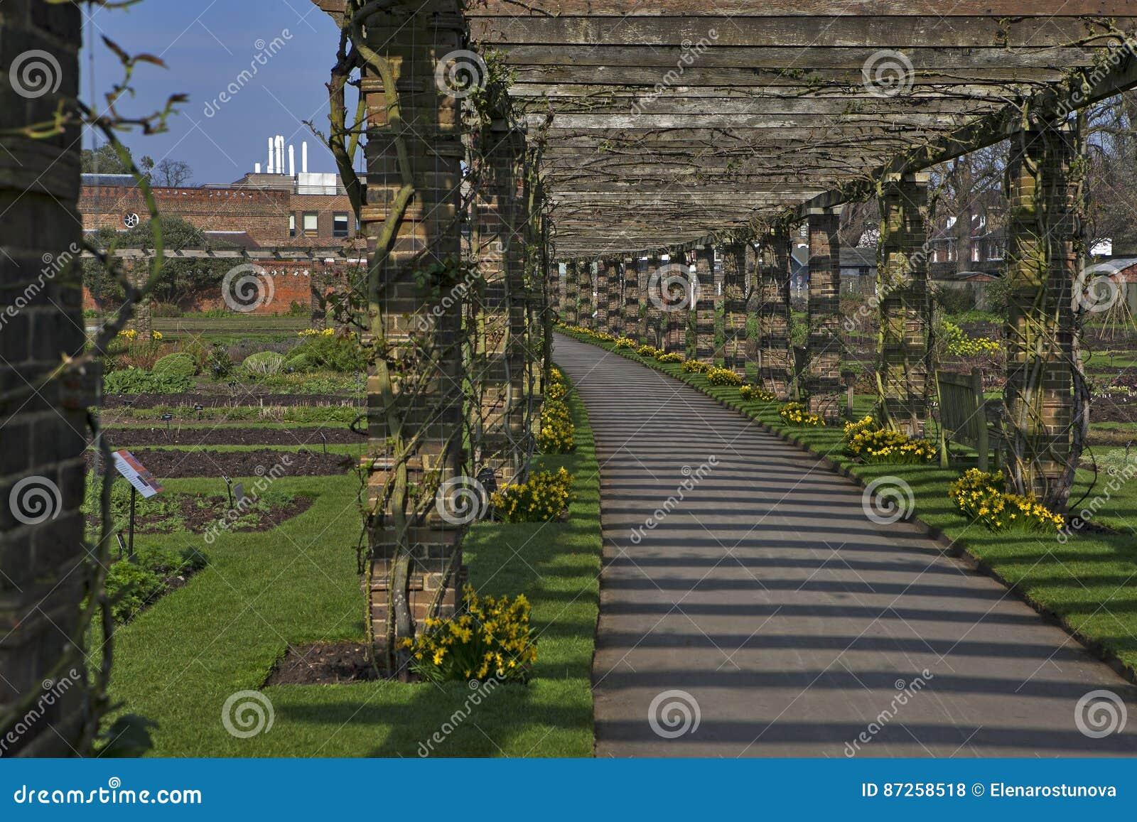 The LABURNUM ARCH IN THE QUEENS GARDEN AT KEW GARDENS SURREY ENGLAND ...