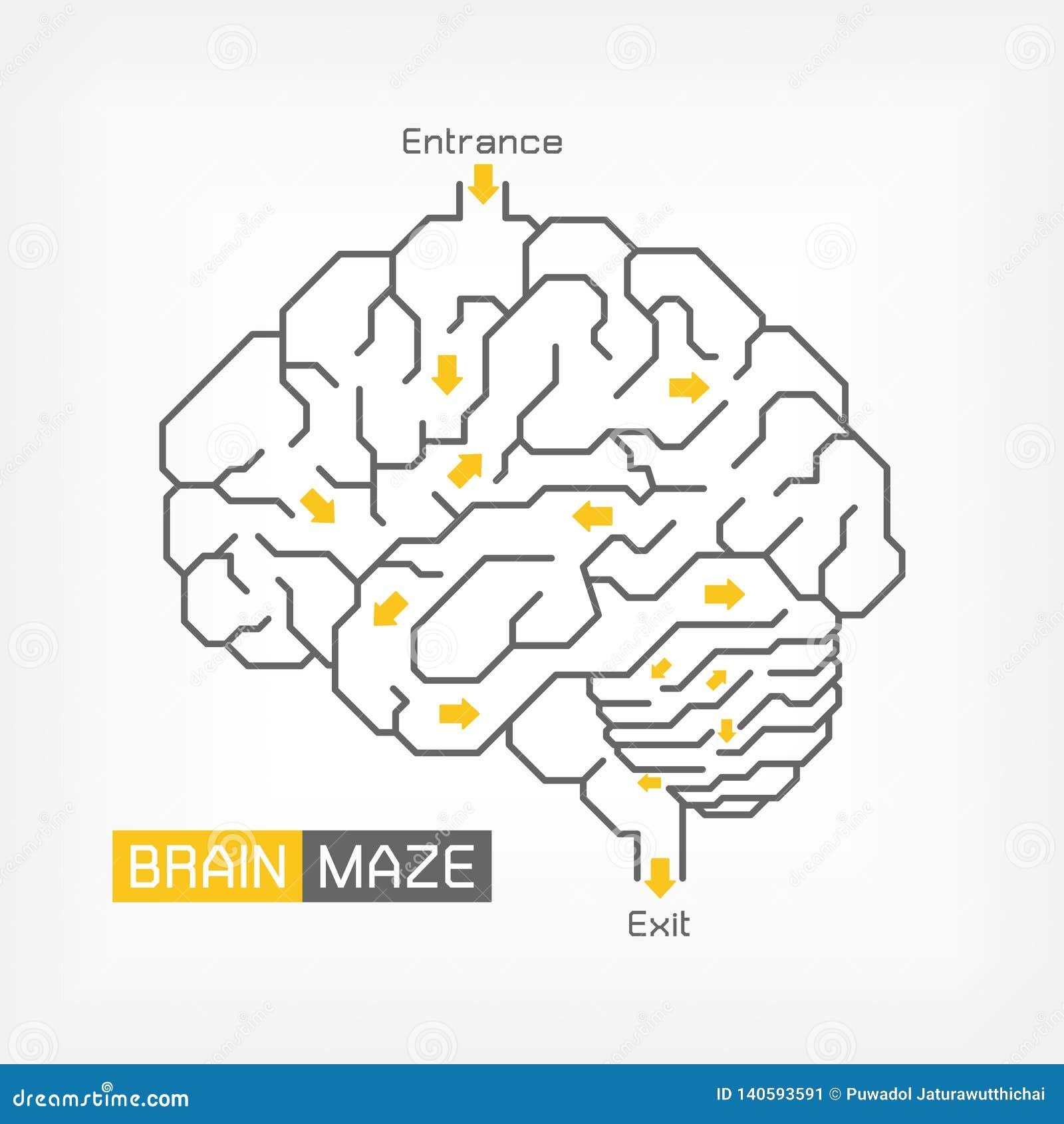 Labyrinthe de cerveau Concept créateur d idée Contour de cervelet et de tronc cérébral de cerveau Conception plate