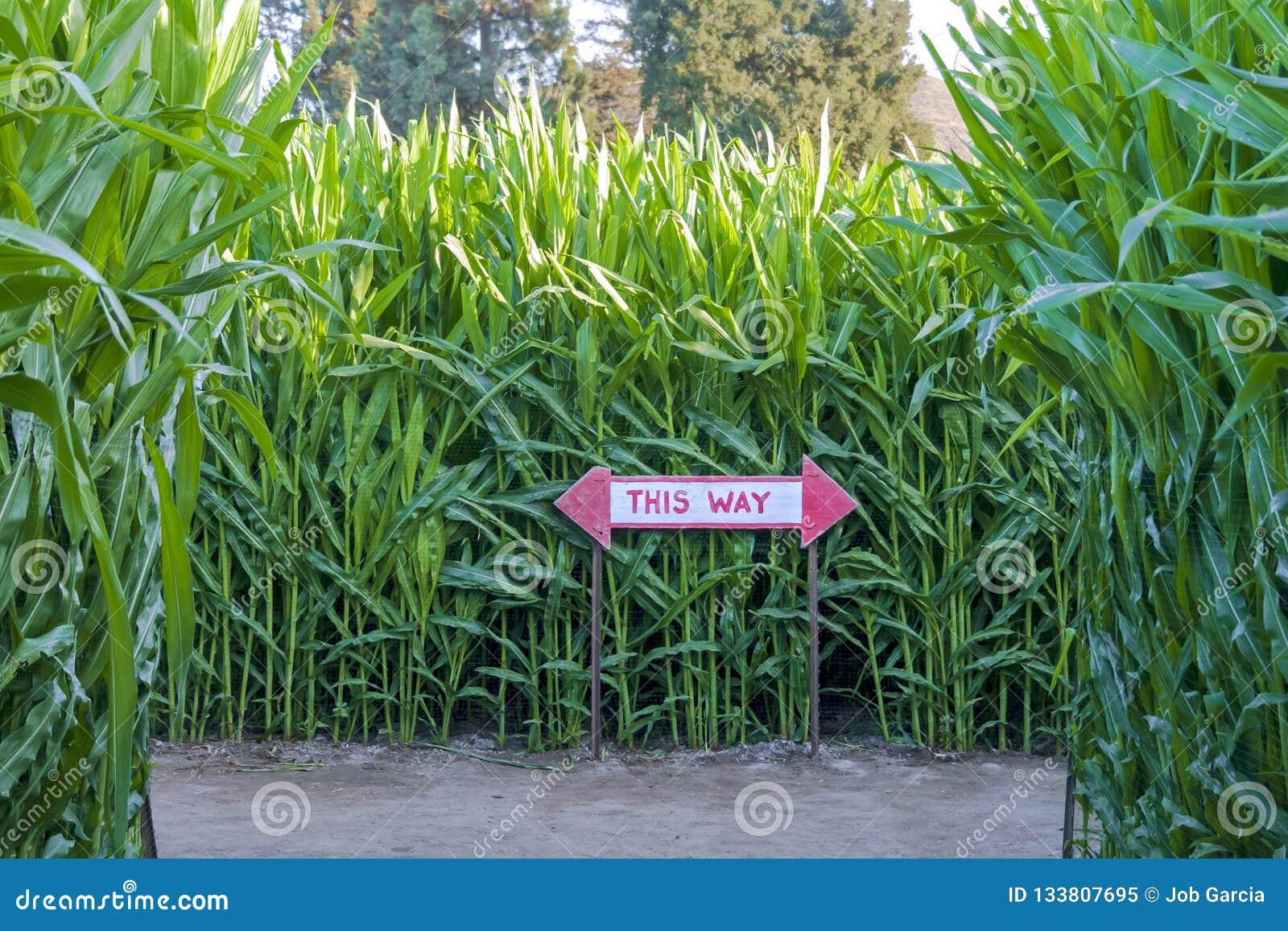 Labyrinthe de maïs avec le signe directionnel