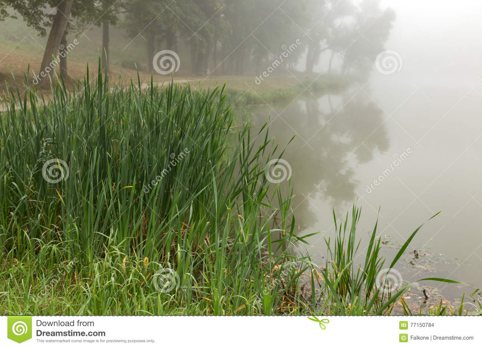 Lac brumeux pendant le matin
