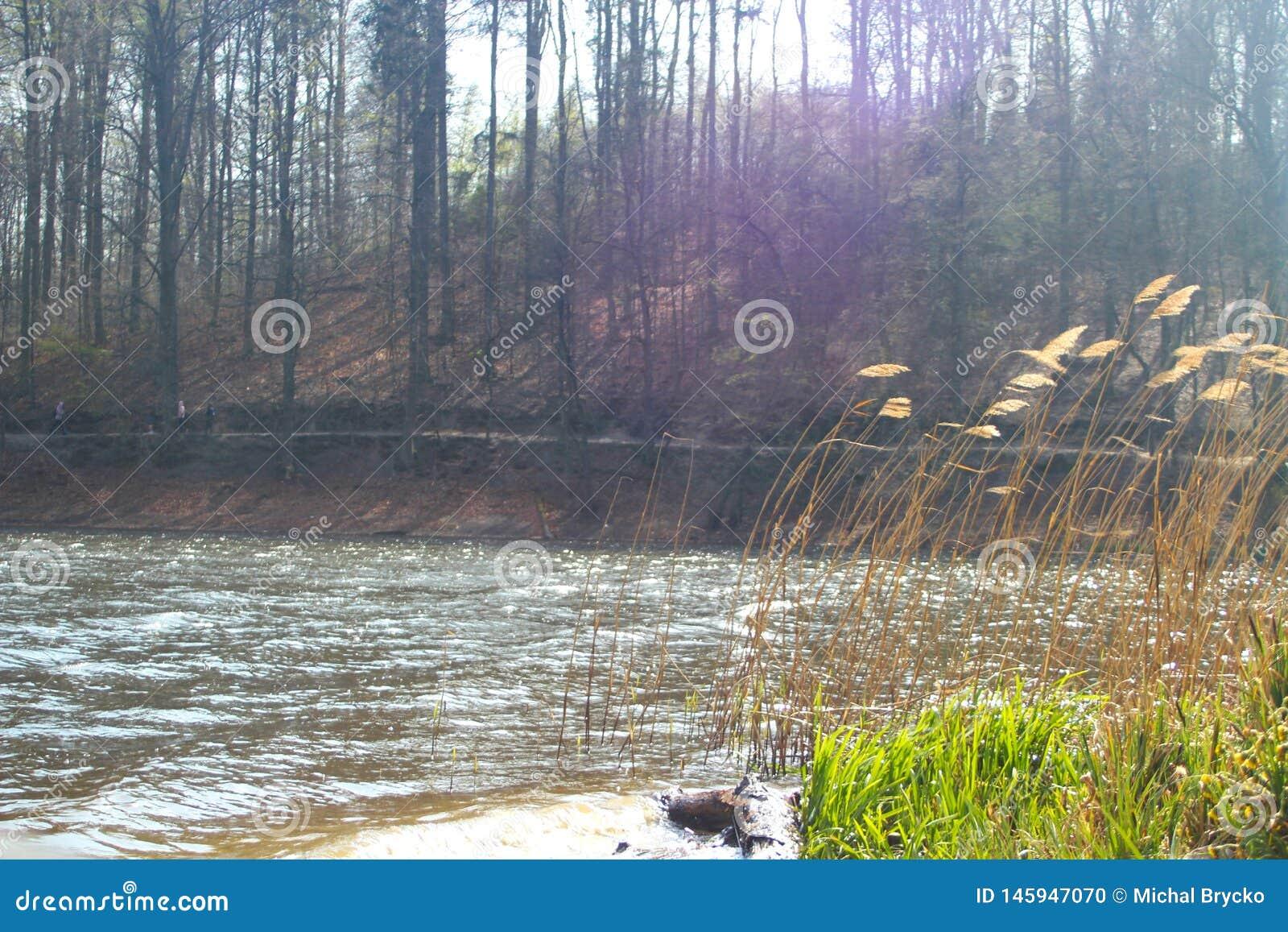 Lac dans la forêt avec l herbe lentement de roulement