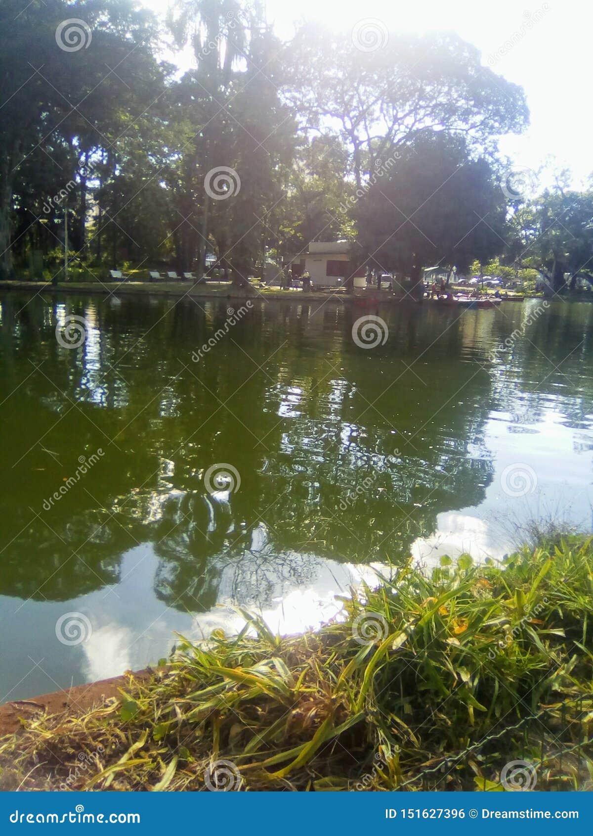 Lac en parc