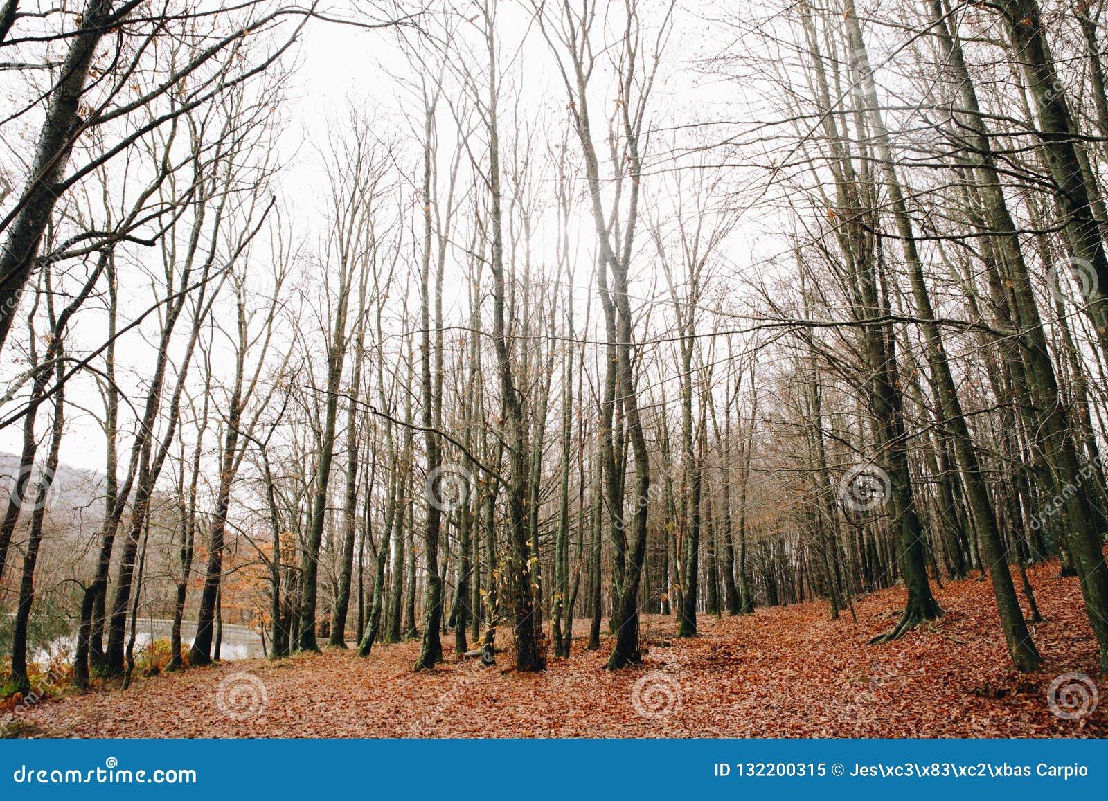 Lac et tresse en Autumn Forest