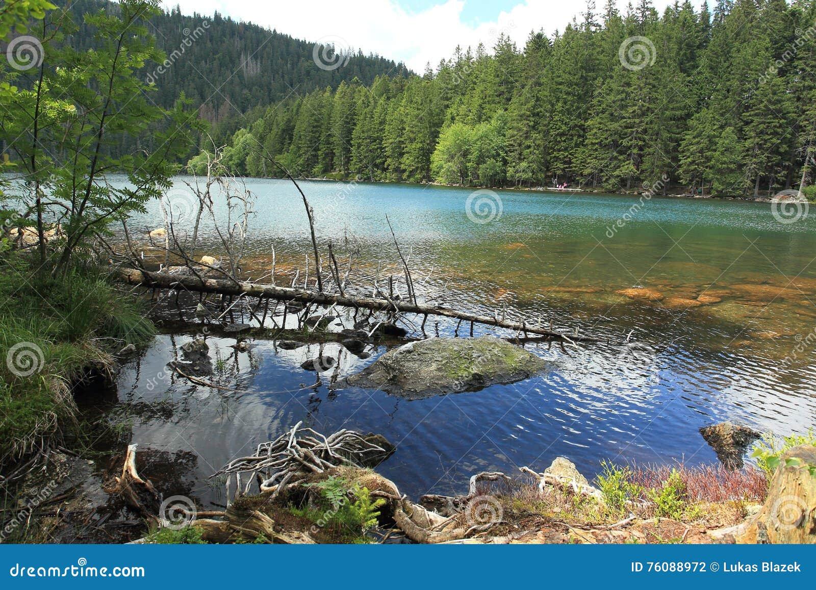 Lac noir dans la forêt de Bohème