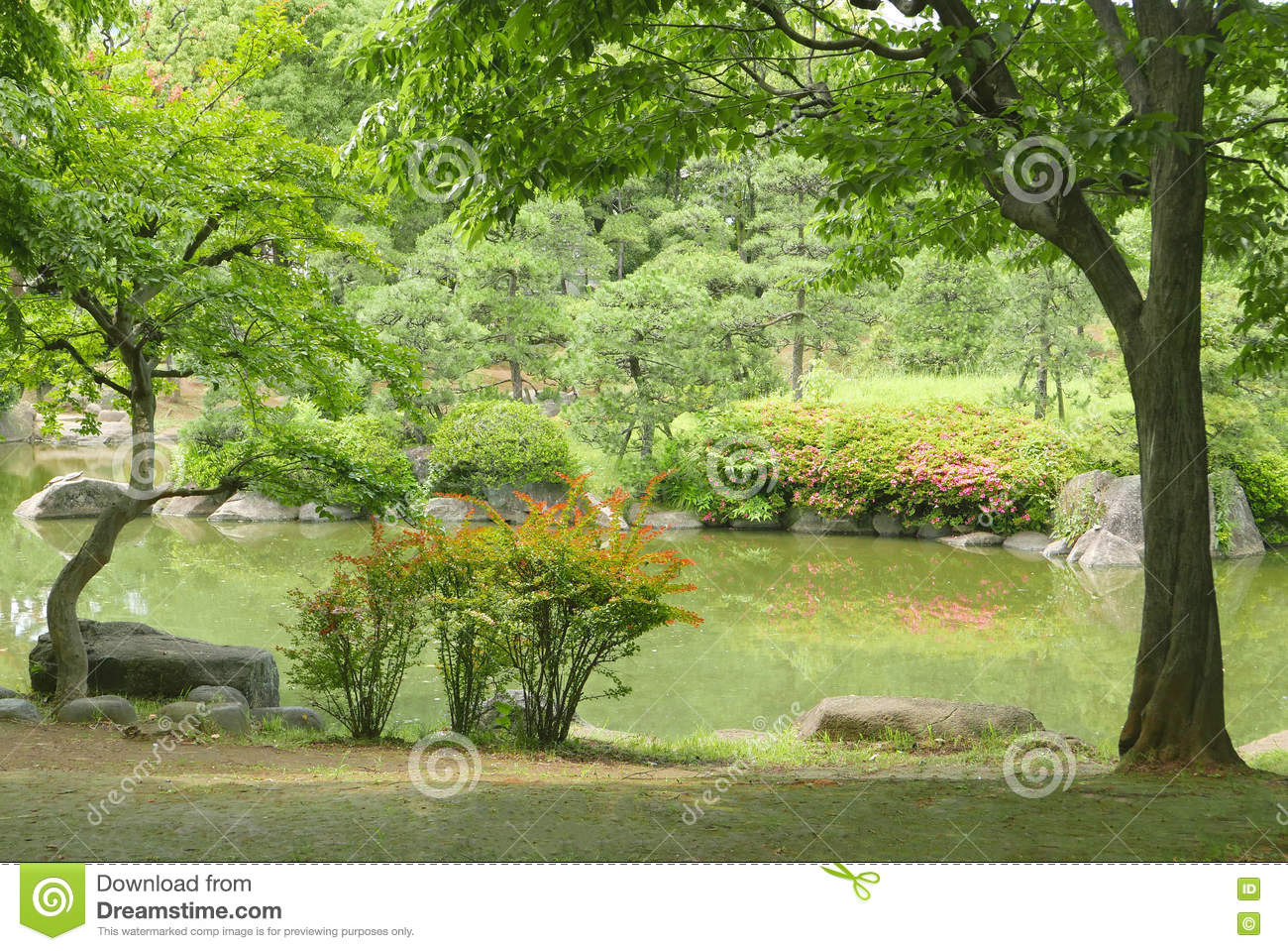 lac plante verte arbre fleur dans le jardin japonais de zen image stock image du conif re. Black Bedroom Furniture Sets. Home Design Ideas