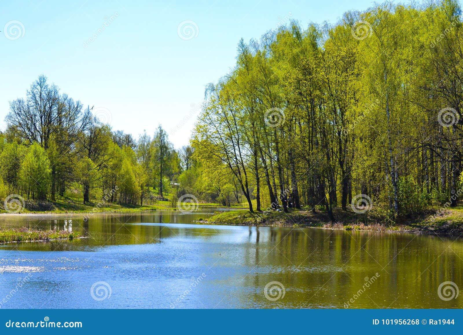 Lac tôt au printemps Arbres, jour ensoleillé, ciel bleu